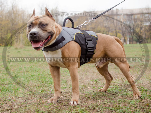 Warm Dog Coat on Amstaff