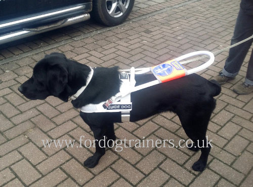 white guide dog harness for sale uk