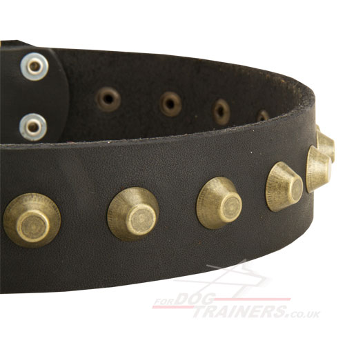 Wide Leather Collar for Shar Pei Dog