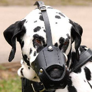 Dalmatian Muzzle, Leather | Soft Dog Muzzle, Felt Padded
