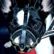 Super Soft Nappa Padded Leather Dog Muzzle for French Bulldog