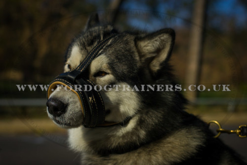 soft leather dog muzzles uk