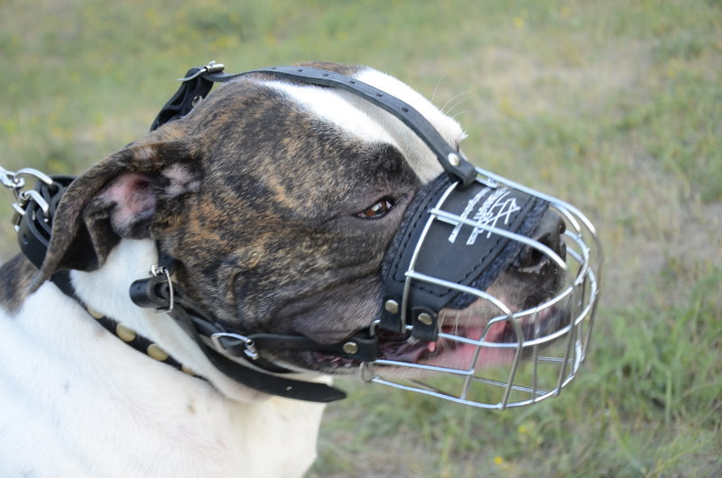 American Bulldog Muzzle