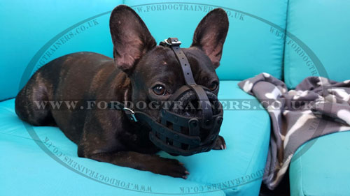 French Bulldog Leather Muzzle UK Bestseller