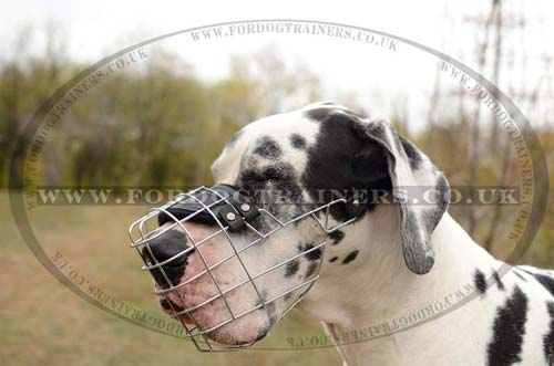 Great Dane Muzzle for Extra Large Dogs