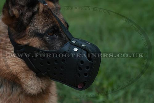Leather Dog