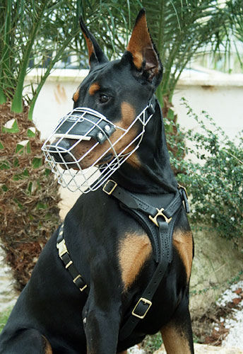 dog muzzle uk. Dog Muzzle UK Bestseller - Doberman ...