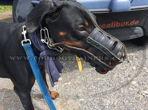 Doberman Dog Muzzle Padded