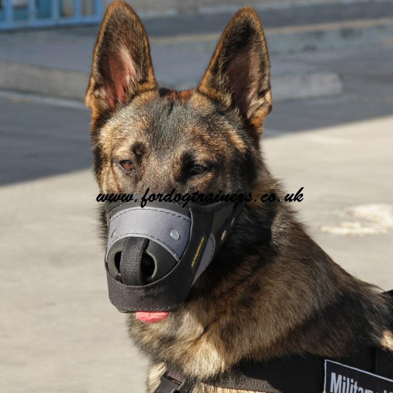 Muzzled Dogs Uk