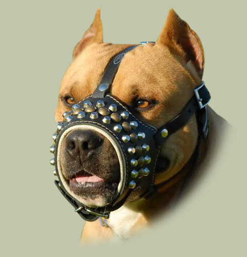 leather dog muzzle with studs
