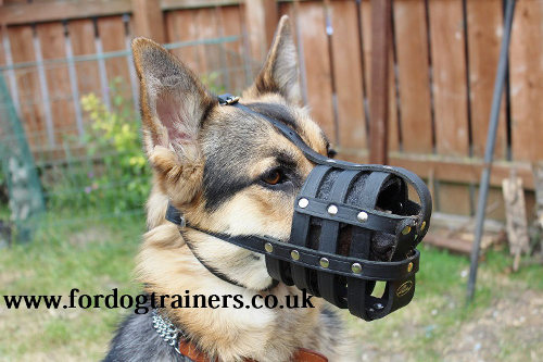 German Shepherd Muzzle for daily use