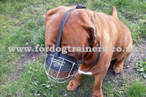 Padded Dog Muzzle for Dogue De Bordeaux