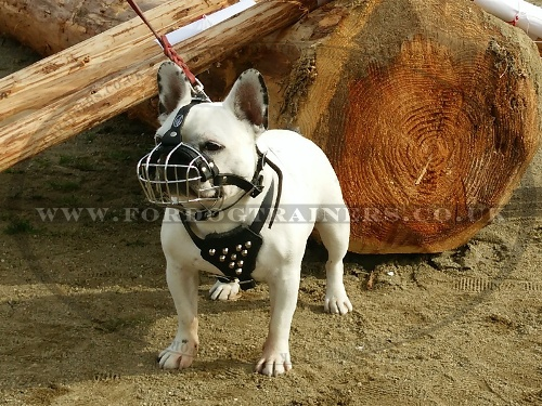 French Bulldog Basket Muzzle for Flat Nosed Dogs