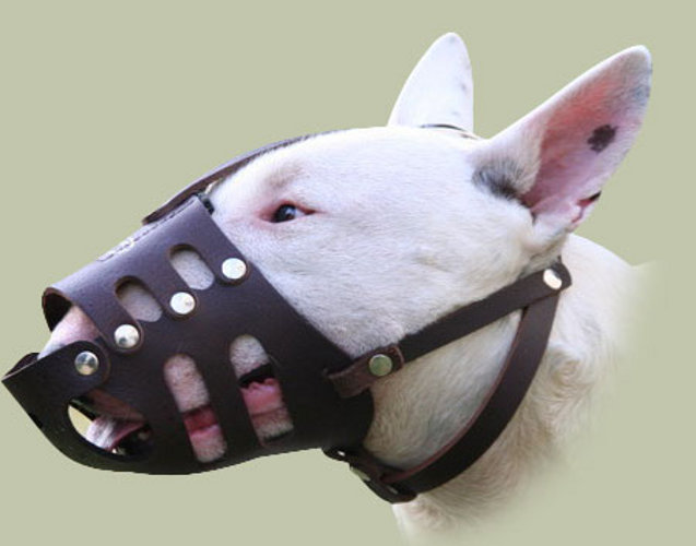 Where Can I Buy A Muzzle For My Dog