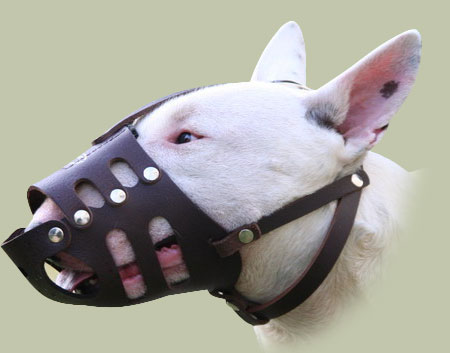 long nose dog muzzle for Bullterrier