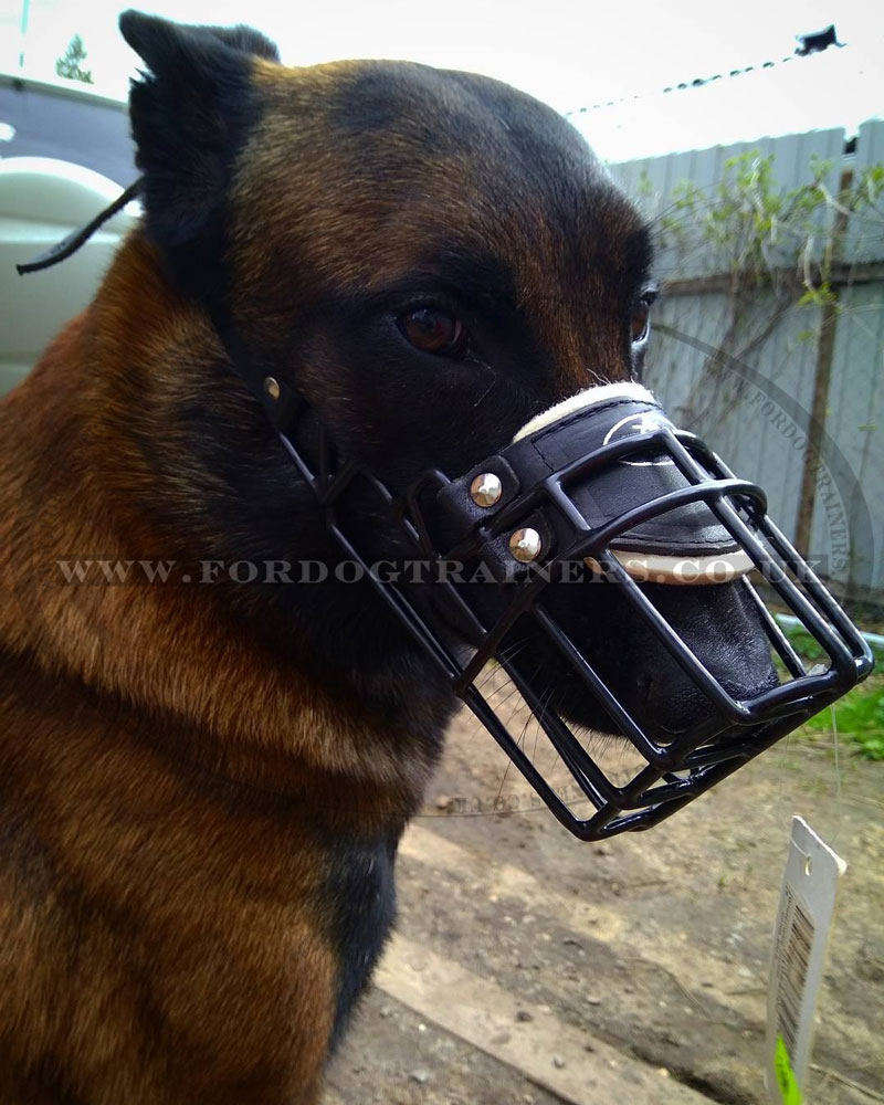 Buy Belgian Malinois Muzzles for Big Dogs