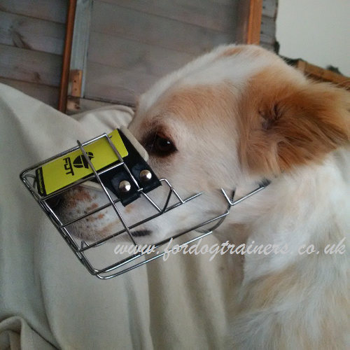 best dog muzzle for drinking