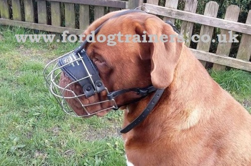 Dogue De Bordeaux Muzzles UK
