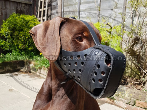 leather dog muzzle for Doberman