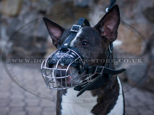 English Bull Terrier Muzzle UK