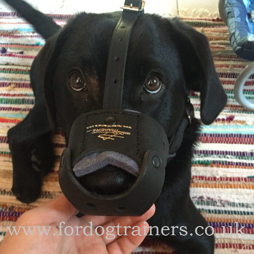 Comfortable Leather Dog Muzzle for Labrador Retriever