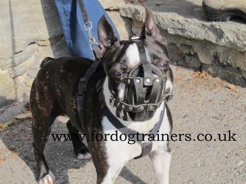 French Bulldog Mesh Muzzle