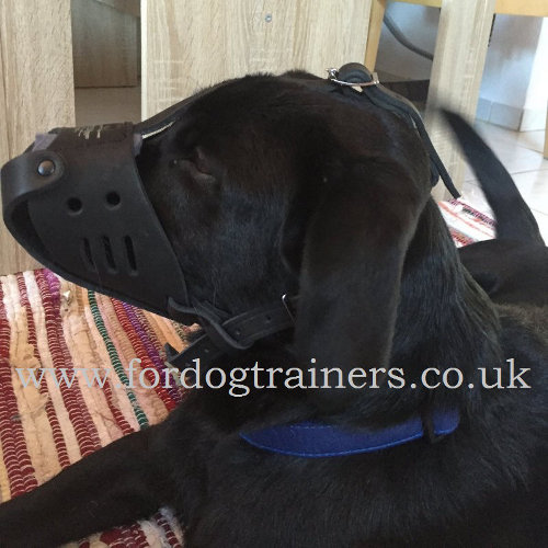 Comfortable Labrador Muzzle UK