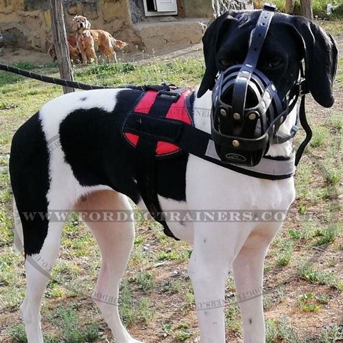 Best Dog Muzzle for Great Dane