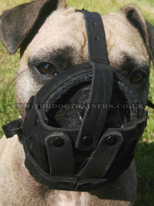 French Bulldog Muzzle for Flat Nose Dog