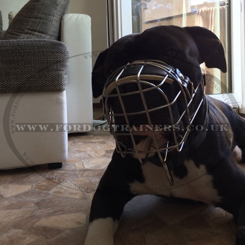 metal cage dog muzzle for staffordshirre bull terrier