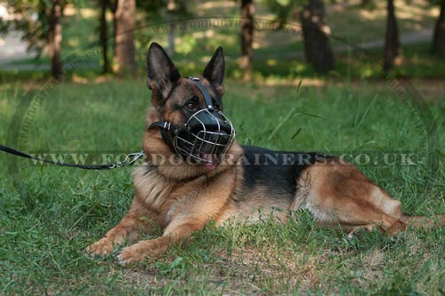 German Shepherd Muzzle UK Bestseller