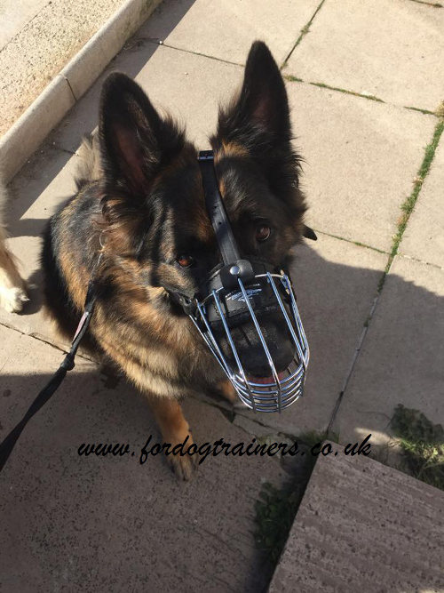 German Shepherd muzzle with padded wire basket