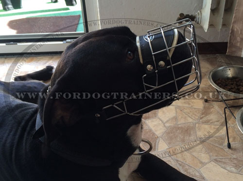 Best Dog Muzzle for Staffy