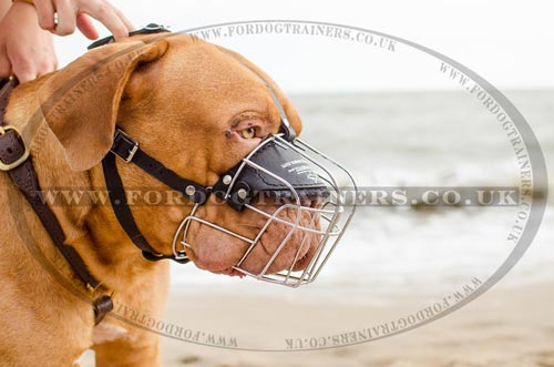 Wire basket dog muzzle for Dogue De Bordeaux