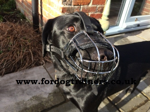 The Best Labrador Muzzles UK