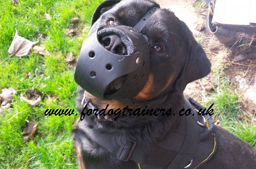Comfortable Universal Leather Dog Muzzle