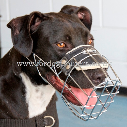 Padded Dog Muzzle for Pitbull