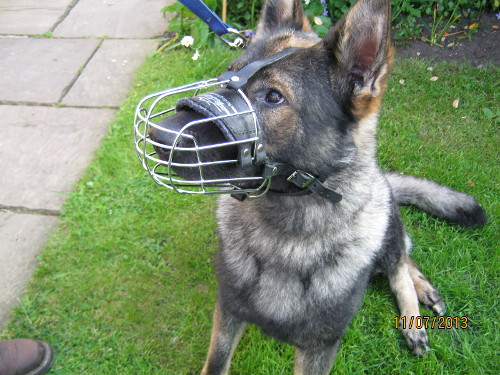 Ventilated Dog Muzzle