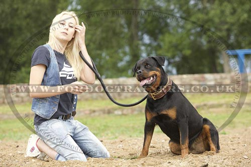 Round Leather Dog Lead