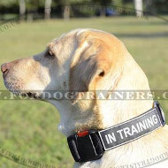 Dog Training Collar for Labrador | Nylon dog Collar for Labrador