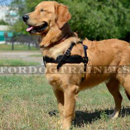 Dog Weight Pulling Harness for Golden Retriever and other dogs