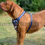 "Dogue de Bordeaux Dog Harness ""American Pride"""