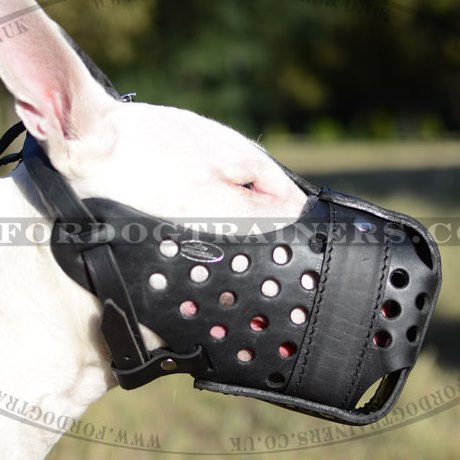 English Bull Terrier Dog Muzzle, Strong and Roomy Leather Basket