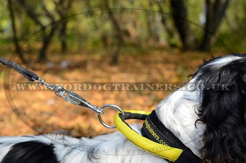 Spaniel Training Collar for Dogs