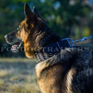 Best Spiked Dog Collar for German Shepherd