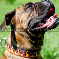 Bright Flame Handpainted Dog Collar for Boxer Dog Training