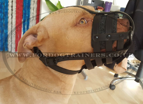 Pit Bull Terrier Dog Muzzle UK Bestseller