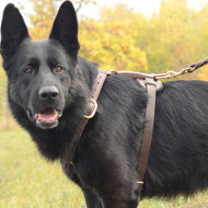 Luxury, Soft and Strong Leather Harness for German Shepherd Dogs