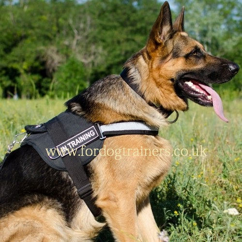 German Shepherd Harness UK | Reflexive Dog Harness + Patches