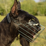 Best Wire Basket Dog Muzzle for Giant Schnauzer Size